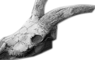 宁夏西河桥发现第四纪哺乳动物化石